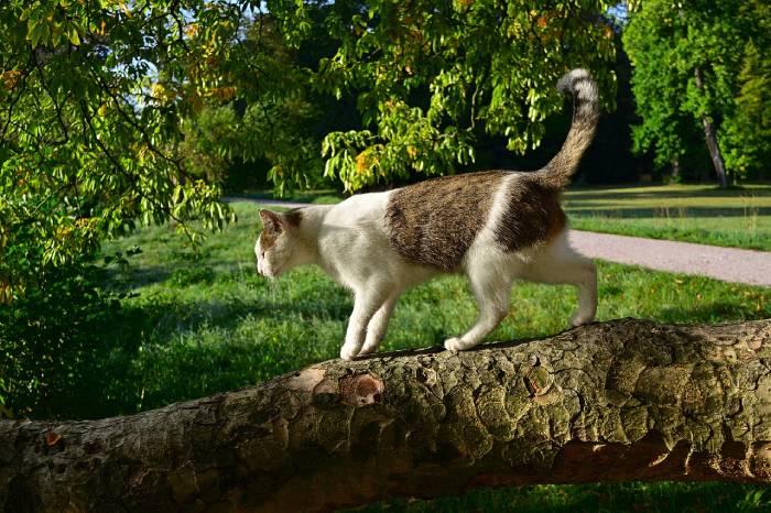 Un chat qui mange de la terre peut se mettre en danger