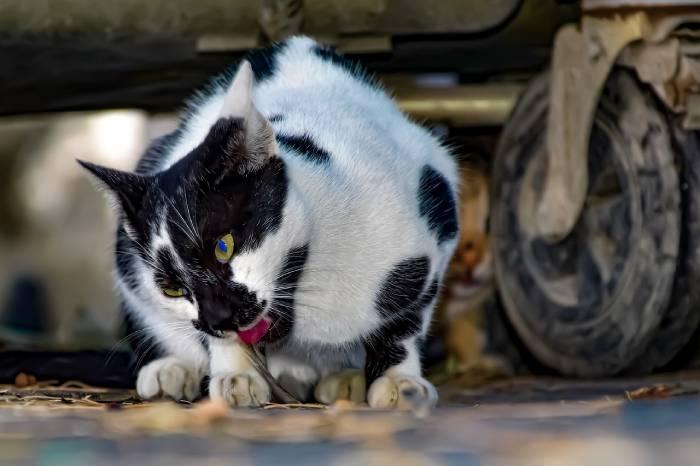chat qui mange des saletés dans la rue