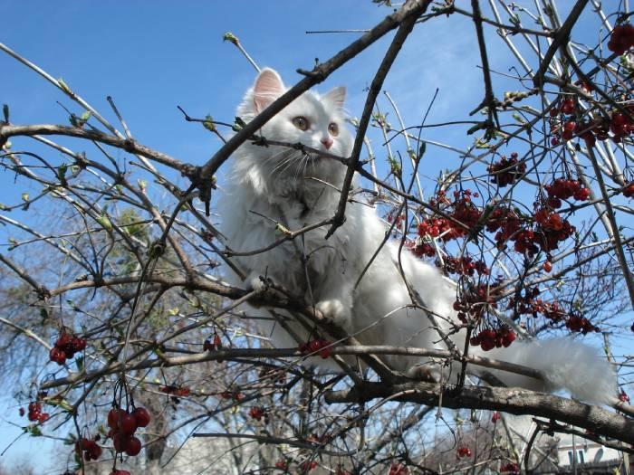 chat ayant un comportement bizarre dans les arbres