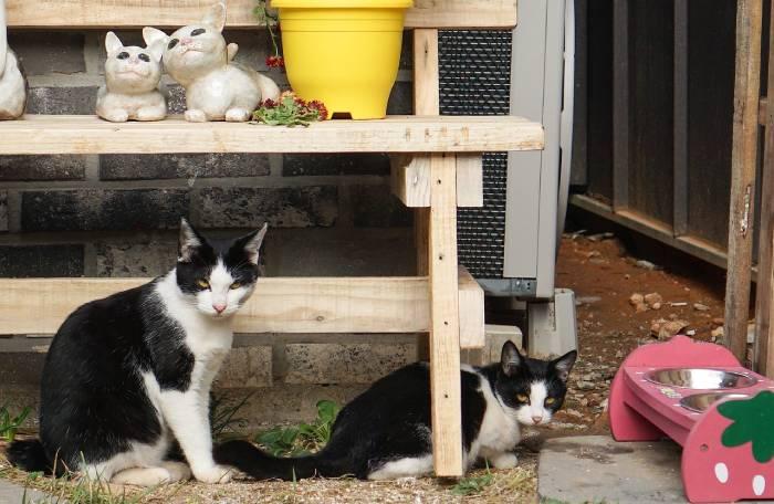 bol surélevé pour chat : avantages et limites