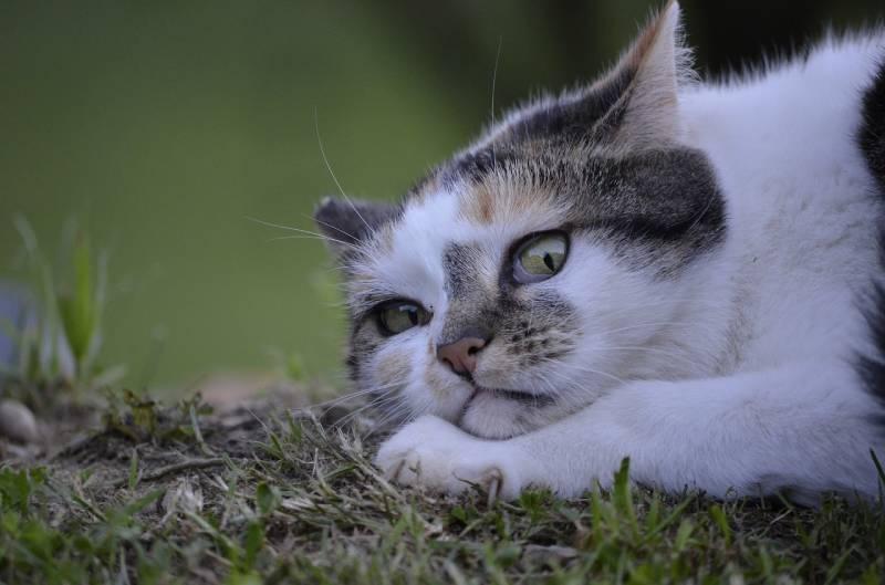 chat qui souffre en silence
