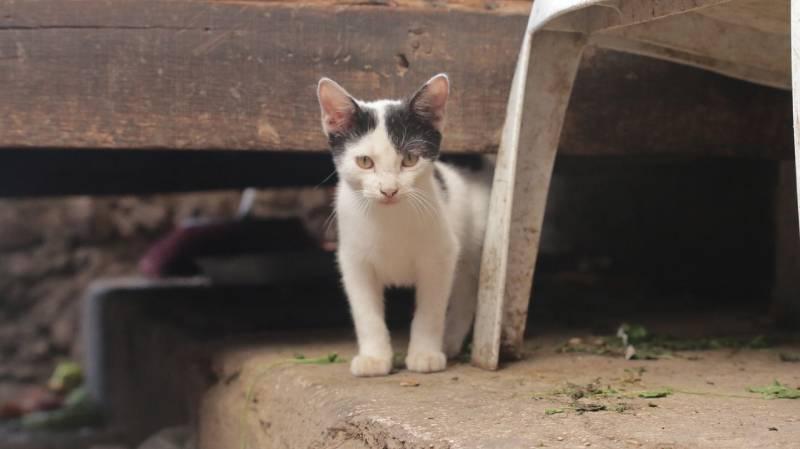 chaton qui hésite à s'approcher de l'homme