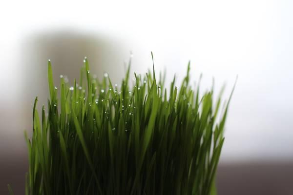 l'herbe a chat pour aider votre animal à digérer