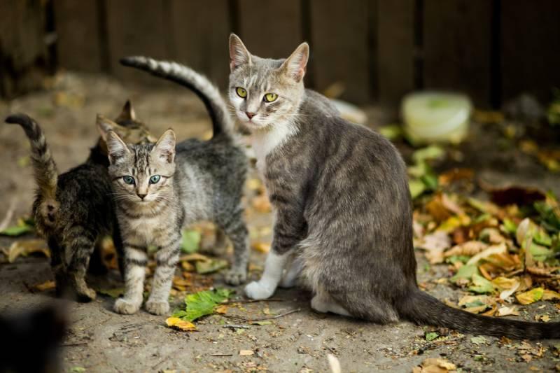 comment nourrir un chaton non sevré