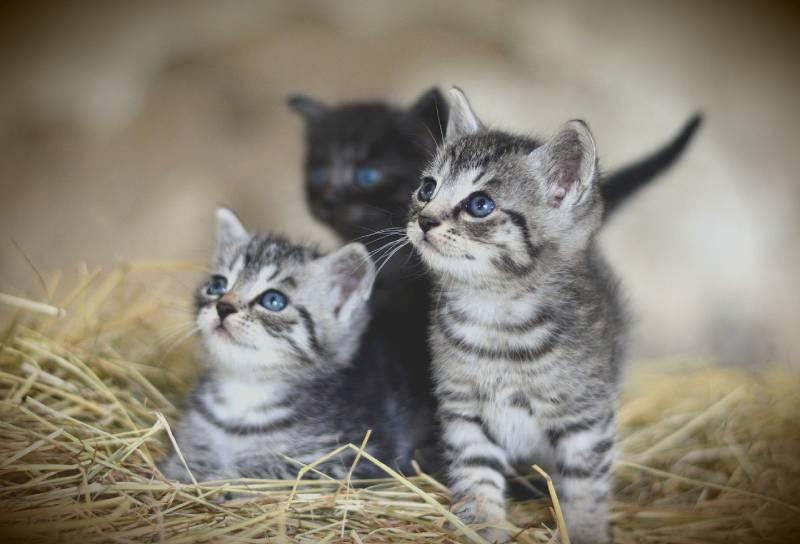 quelle nourriture à donner aux petits chats ?