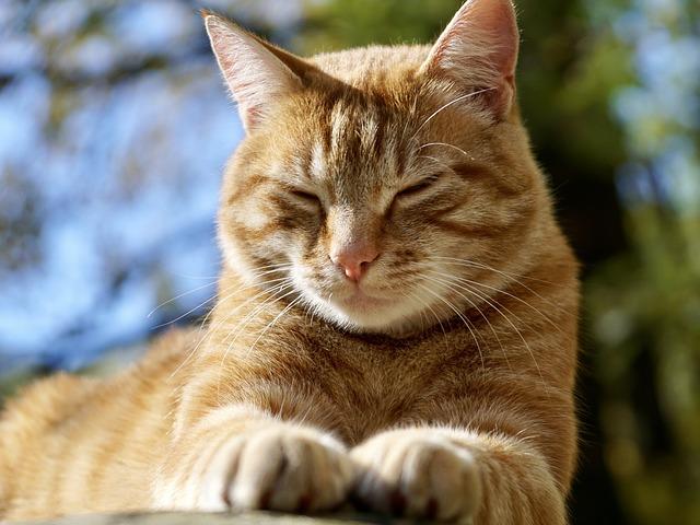 clignement lent chat