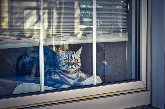 chat attend à la fenêtre sur son coussin