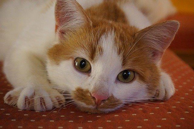 chat mord pour aimer