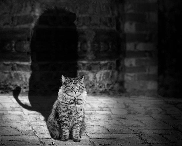 chat qui grossit : astuces et recommandations