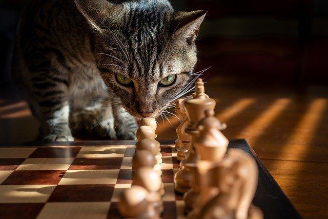 chat et ennuie