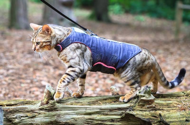 comment promener son chat à l'extérieur et en sécurité